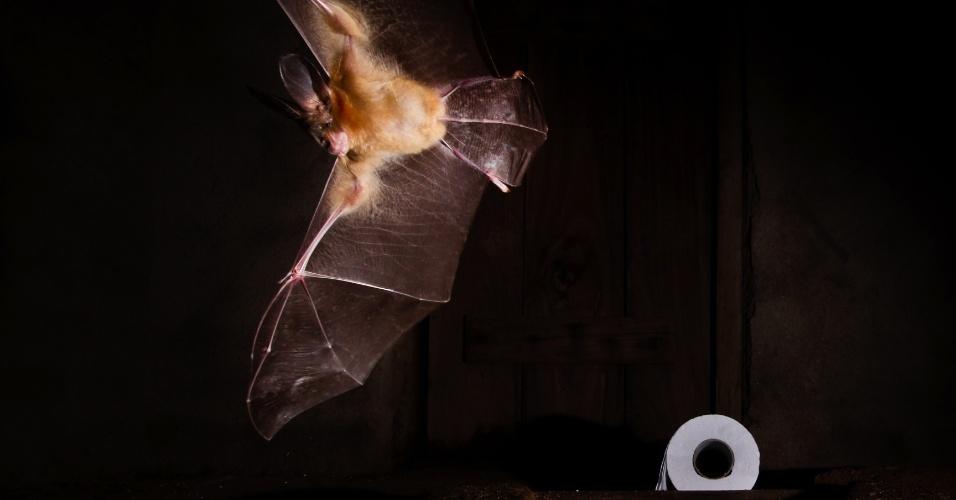 MORCEGO NO BANHEIRO - Um morcego foi flagrado saindo de um esconderijo bem inusitado: uma fossa de banheiro. O local é como uma caverna sem predadores, quente e com estoque de alimentos, como invertebrados