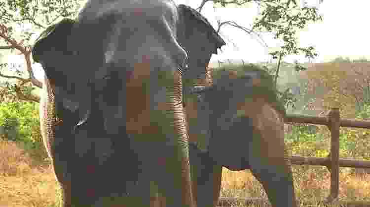 Rana e Maia, as novas amigas de Ramba no santuário - DIVULGAÇÃO/SEB
