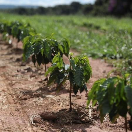 Exportação total de café do Brasil bate recorde de 44,5 mi sacas em 2020, diz Cecafé - Por Nayara Figueiredo