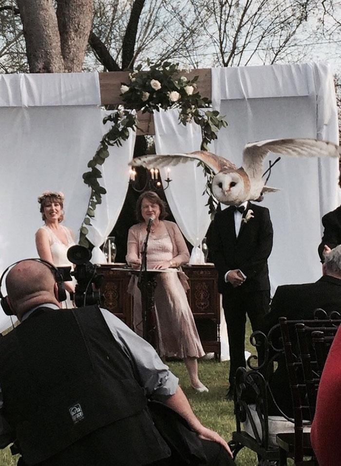 17.ago.2015 - Um casamento animal