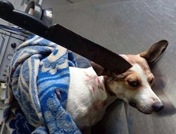 Guri foi operado para a retirada de facão e será submetido a nova cirurgia, desta vez no olho