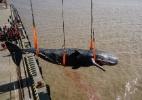 Cachalote encontrado morto tinha 29 quilos de plástico no estômago - Ji Chunpeng/Xinhua