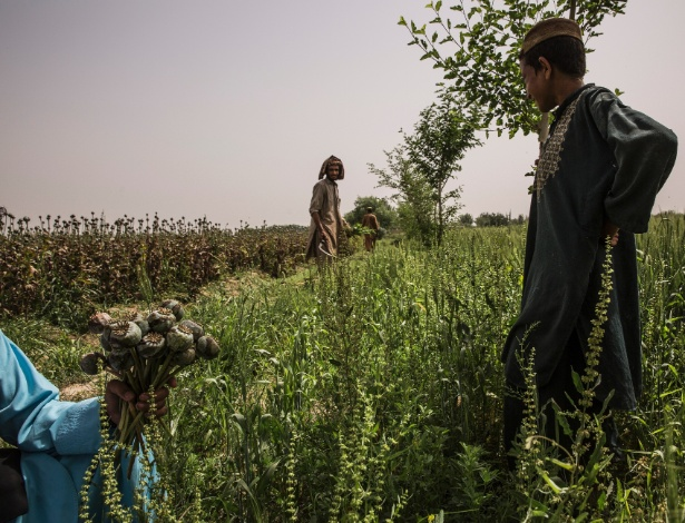 Agricultores em plantação de ópio em Garmsir, Afeganistão