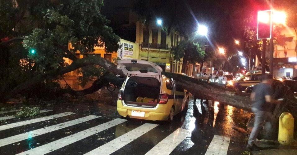 15.fev.2018 - Equipes da prefeitura foram acionadas para a retirada de uma árvore que caiu sobre um carro na avenida Gomes Freire, na Lapa