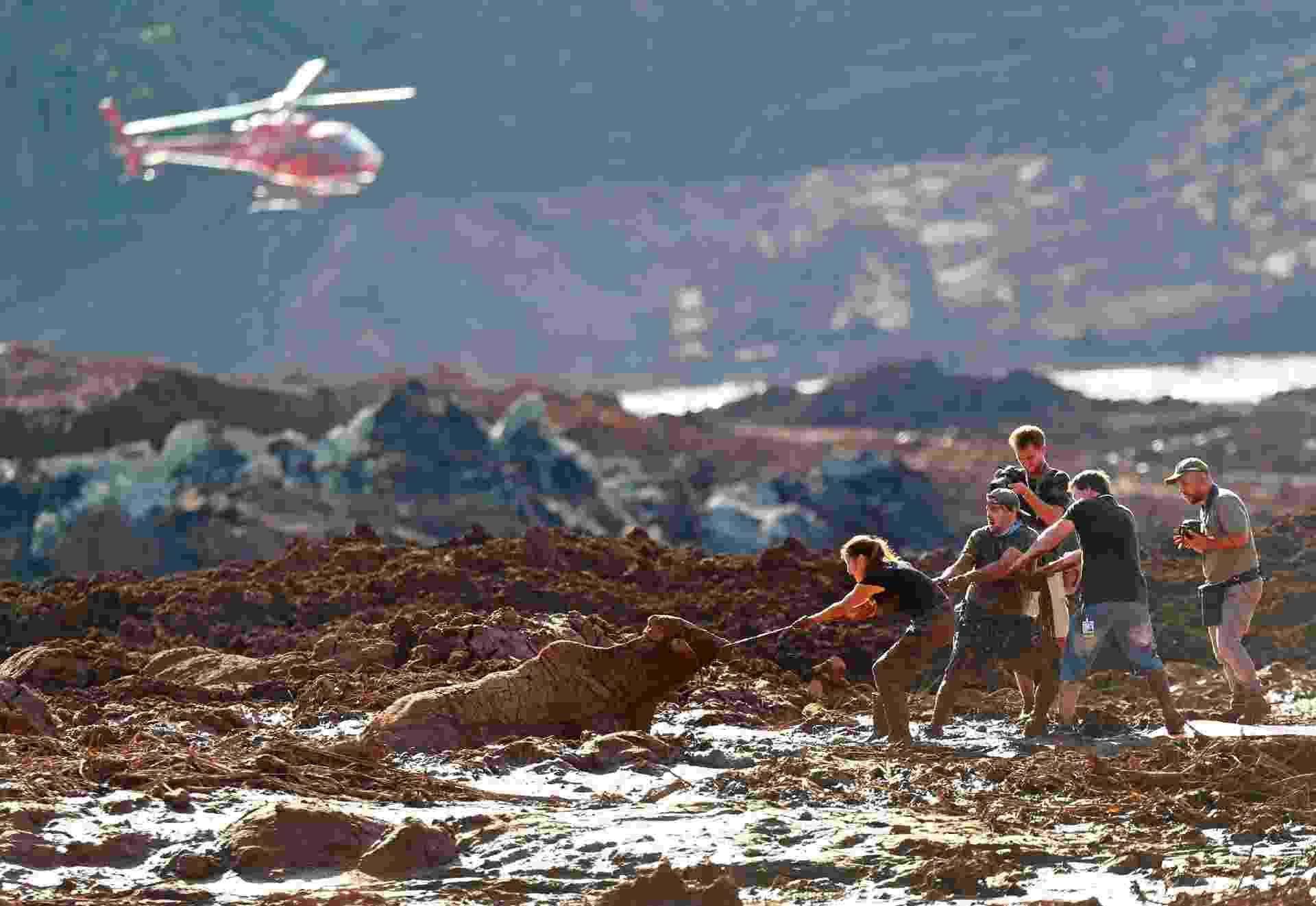 27.jan.2019 - Equipe de resgate voluntária tenta salvar uma vaca presa após rompimento da barragem da Vale - Wilton Júnior/Estadão Conteúdo
