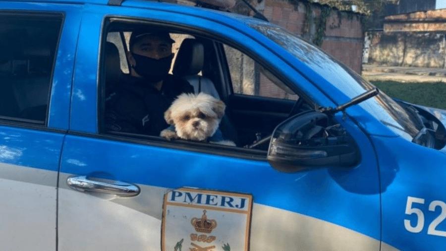 O cãozinho Billy, levado por bandidos que roubaram um carro na Rodovia Rio-Magé, foi encontrado pela PM - Divulgação Policia Militar do Rio de Janeiro