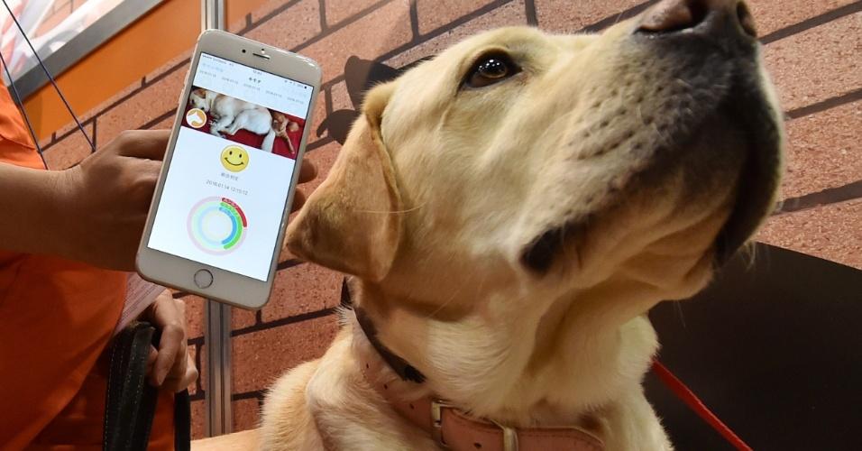 """14.jan.2015 - Cachorro usa dispositivo de comunicação chamado de """"Internet dos Animais"""", desenvolvido pela empresa japonesa Anicall. O recurso é equipado com sensores de movimento, temperatura e pressão do ar capaz de exibir os sentimentos de um animal no smartphone de seu proprietário"""