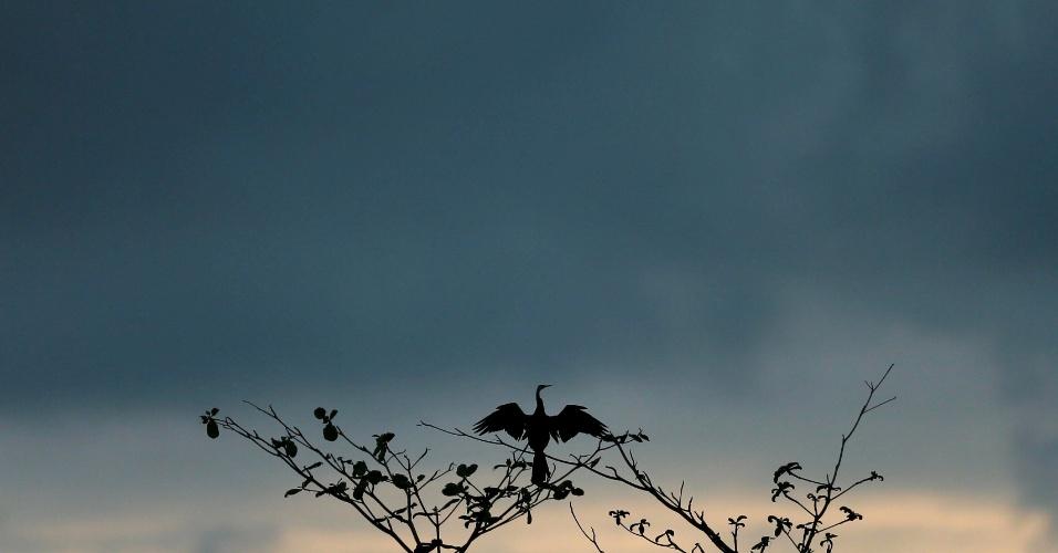 21.nov.2016 - Pássaro seca suas penas sobre uma árvore enquanto com nuvens de tempestade em dia molhado em Colombo, no Sri Lanka