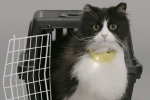 Quem resistiria a bater papo com um gato? (Foto: Catterbox.com)