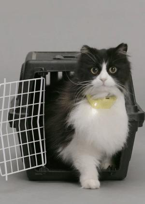 Gato com coleira Catterbox