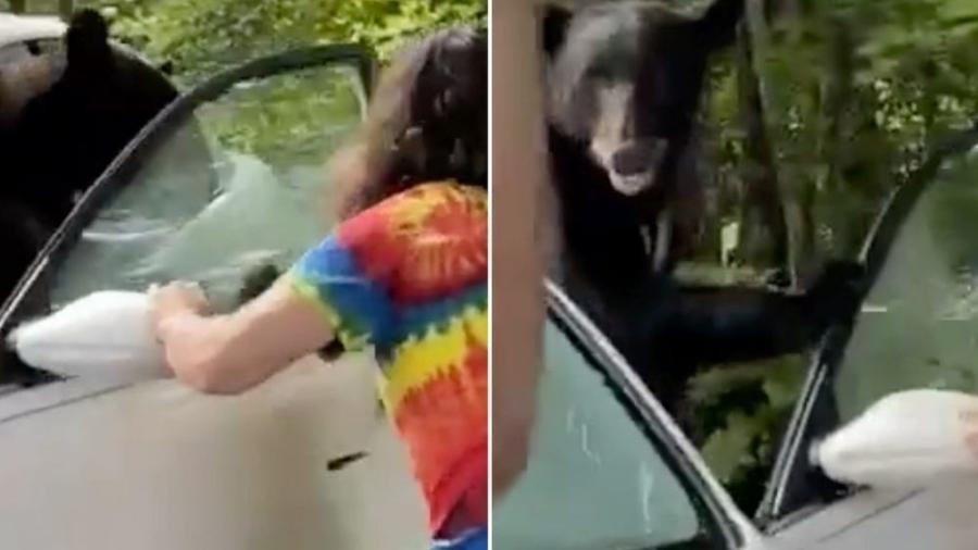 Urso precisou ser enxotado por Joseph Deel de dentro do veículo - Arquivo Pessoal/Joseph Deel