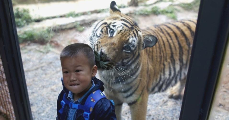 25.set.2015 - Criança 'parece' receber um afago de tigre no Yunnan Wildlife Park, em Kunming, província de Yunnan, na China