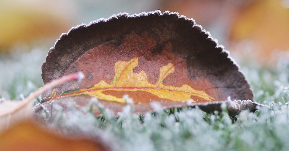 6.dez.2016 - Folha de macieira congelada fotografada em Gaiberg perto de Heidelberg, na Alemanha