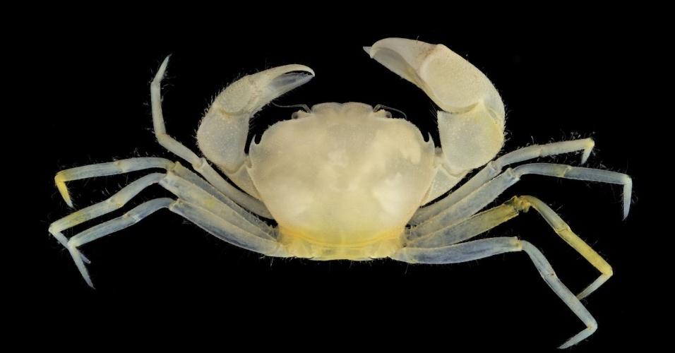 Uma nova espécie de caranguejo descoberta na ilha de Guam, no oceano Pacífico, recebeu o nome de dois personagens da saga Harry Potter. O Harryplax severus pode ser encontrado no fundo de escombros de corais. A espécie faz parte da coleção do pesquisador Harry Conley, morto no início dos anos 2000, que está em estudo por cientistas de diferentes universidades