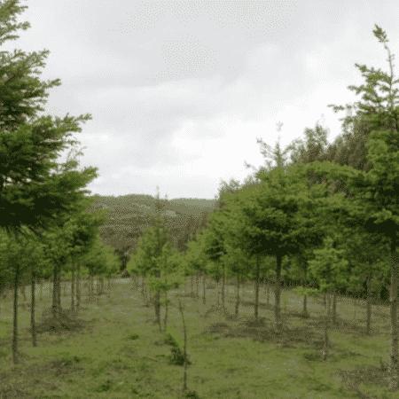 O esquema de subsídios do Chile falhou em aumentar estoques de carbono e conter a perda de biodiversidade, diz estudo - ROBERT HEILMAYR