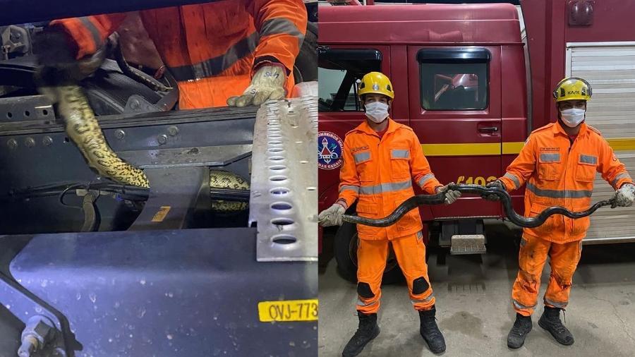Sucuri foi encontrada em estepe de caminhão em Salinas, interior de Minas Gerais - Divulgação
