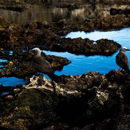 O arquipélago Sao Pedro e São Paulo está localizado no oceano Atlântico, na parte mais oriental do Brasil - Marcus Leoni/Folhapress