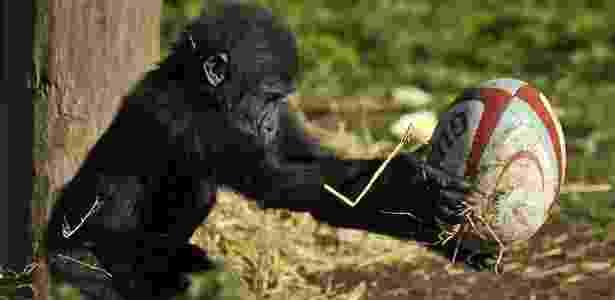 Kukena nasceu no zoológico de Bristol em 2011 - PA - PA