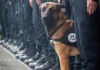 Police Nationale/Reprodução