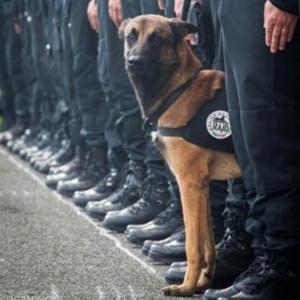 Diesel, cadela da polícia francesa, foi baleada durante operação contra terroristas em Saint-Denis, a norte de Paris
