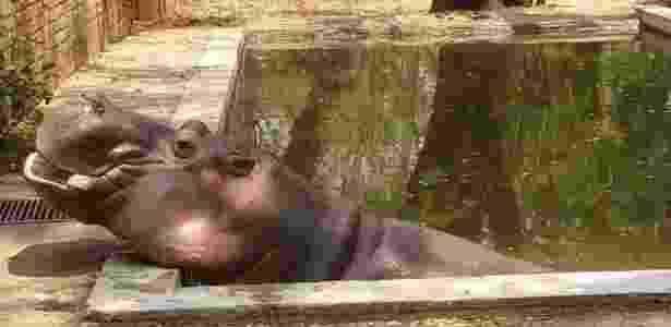27.fev.2017 - Polícia ainda tenta identificar autores e a motivação do ataque ao único hipopótamo de El Salvador - Zoológico de El Salvador - Zoológico de El Salvador