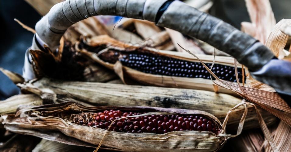 17.mar.2017 - Sementes de milho de pipoca de diferentes cores e formatos são testadas na plantação orgânica