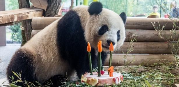 A panda Meng Meng ganhou festa no aniversário de quatro anos