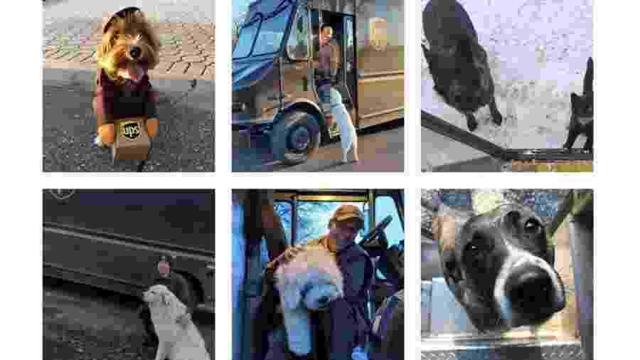 Fotos da página de Instagram UPS Dogs - Reprodução