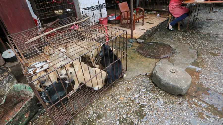 Mercado molhado na China, onde também é consumida carne de cachorro - South China Morning Post via Getty Images