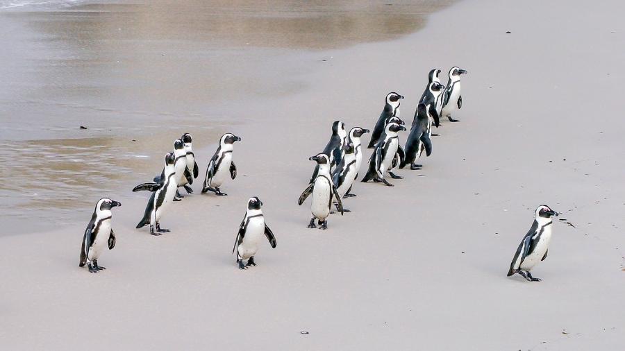 Imagem meramente ilustrativa de pinguins  - Robert Pastryk por Pixabay