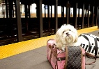 Astro canino ganha título de rei da cultura pop por sucesso nas redes sociais - Reprodução/Instagram/@itsdougthepug