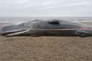 O corpo de outra baleia foi encontrada em praia próxima a Skegness neste domingo (24)