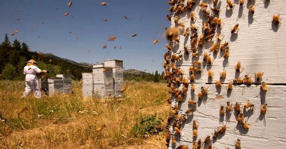 8.fev.2016 - Um apicultor cuida das colmeias em Utah, nos EUA. O declínio acentuado do setor fez crescer a preocupação  já que os insetos são essenciais para a polinização