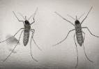 Chikungunya provoca doenças vasculares irreversíveis em pacientes, revela pesquisa - Oscar Rivera/EFE