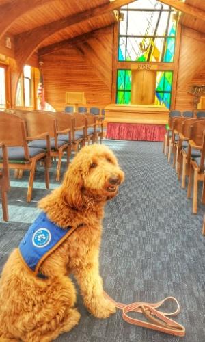 """11.jul.2016 - Lulu, uma cadela da raça goldendoodle, é funcionária da funerária Ballard-Durand Funeral & Cremation Services, em Nova York (EUA). Ela é """"terapeuta"""" e sua função é ajudar as pessoas que perderam um ente querido"""