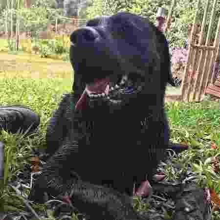 Barney morreu na noite de ontem - Divulgação/Corpo de Bombeiros Militar de Santa Catarina