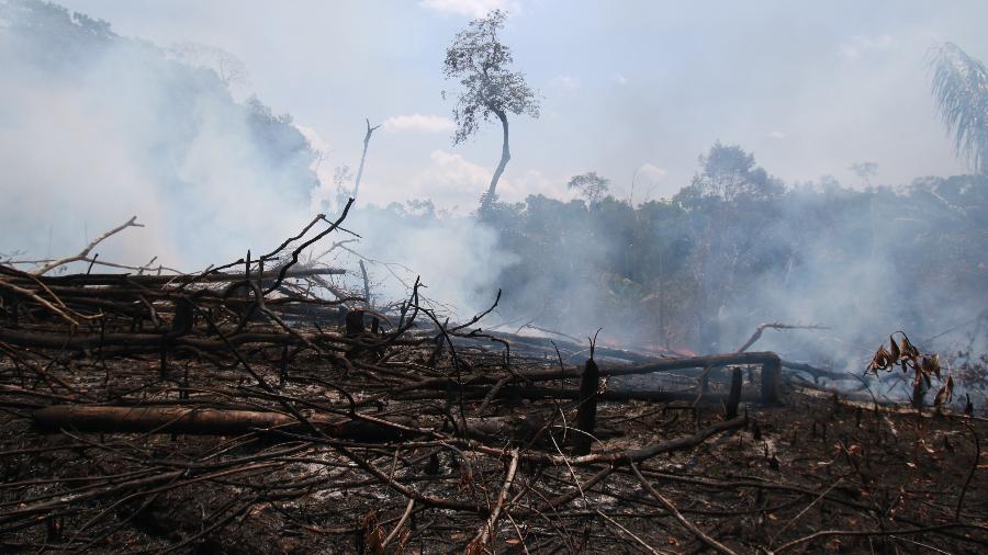Queimada em Novo Airão, no Amazonas  - Márcio Melo - 29.ago.19/Folhapress
