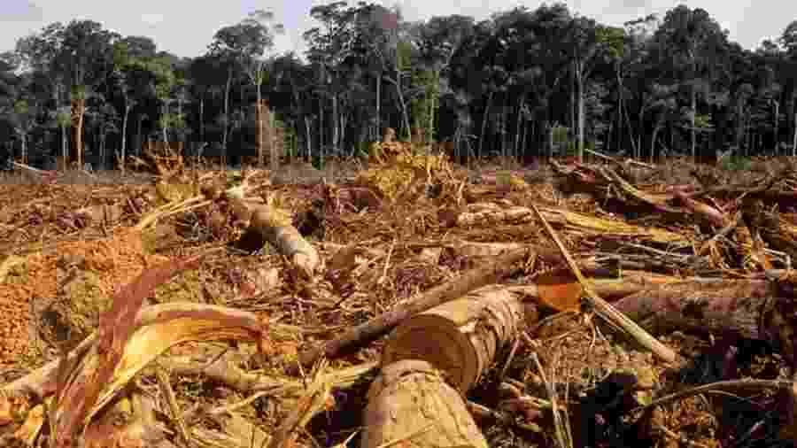 Pesquisador diz que agricultores podem ser aliados na proteção da Amazônia - Getty Images