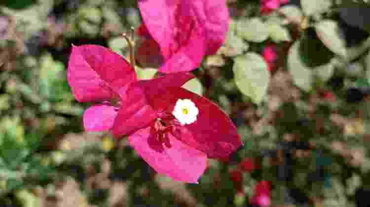 Foto de flor com sensor macro do Redmi Note 9 - Rodrigo Trindade/UOL - Rodrigo Trindade/UOL
