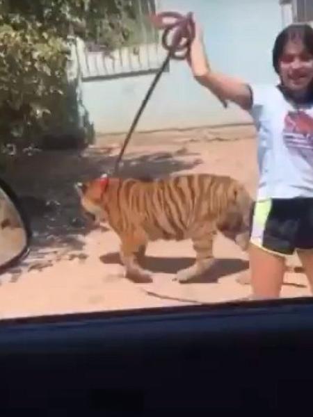 Adolescente caminha com tigre de estimação em Sinaloa, no México - Reprodução