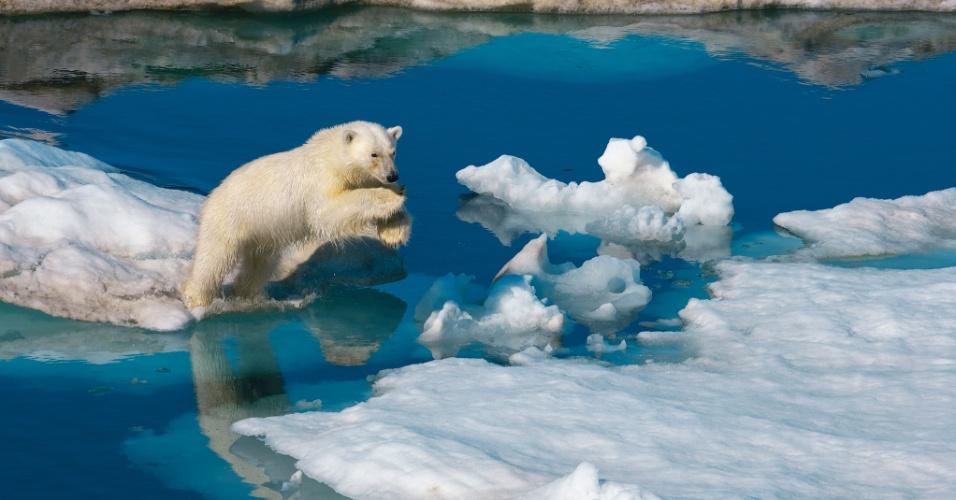 A riqueza da vida no arquipélago ártico da Noruega enfrenta o degelo. Alguns pedaços ainda suportam o peso de um urso, mas este jovem macho pula em um ambiente em mudanças, em Svalbard e Jan Mayen, Noruega