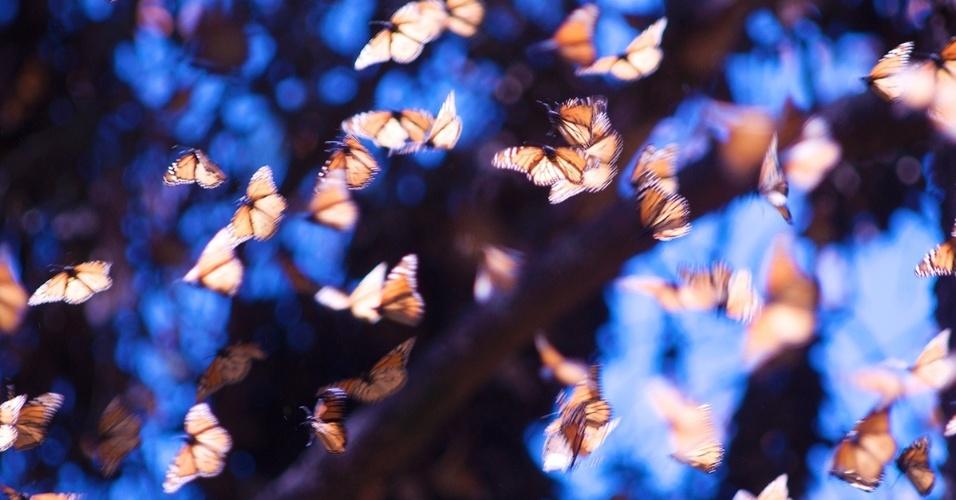 2.mar.2016 - Borboletas monarca chegam ao Santuário de Rosário, no México. Mais de 1 bi de borboletas migra da América do Norte em direção ao México anualmente no início do outono