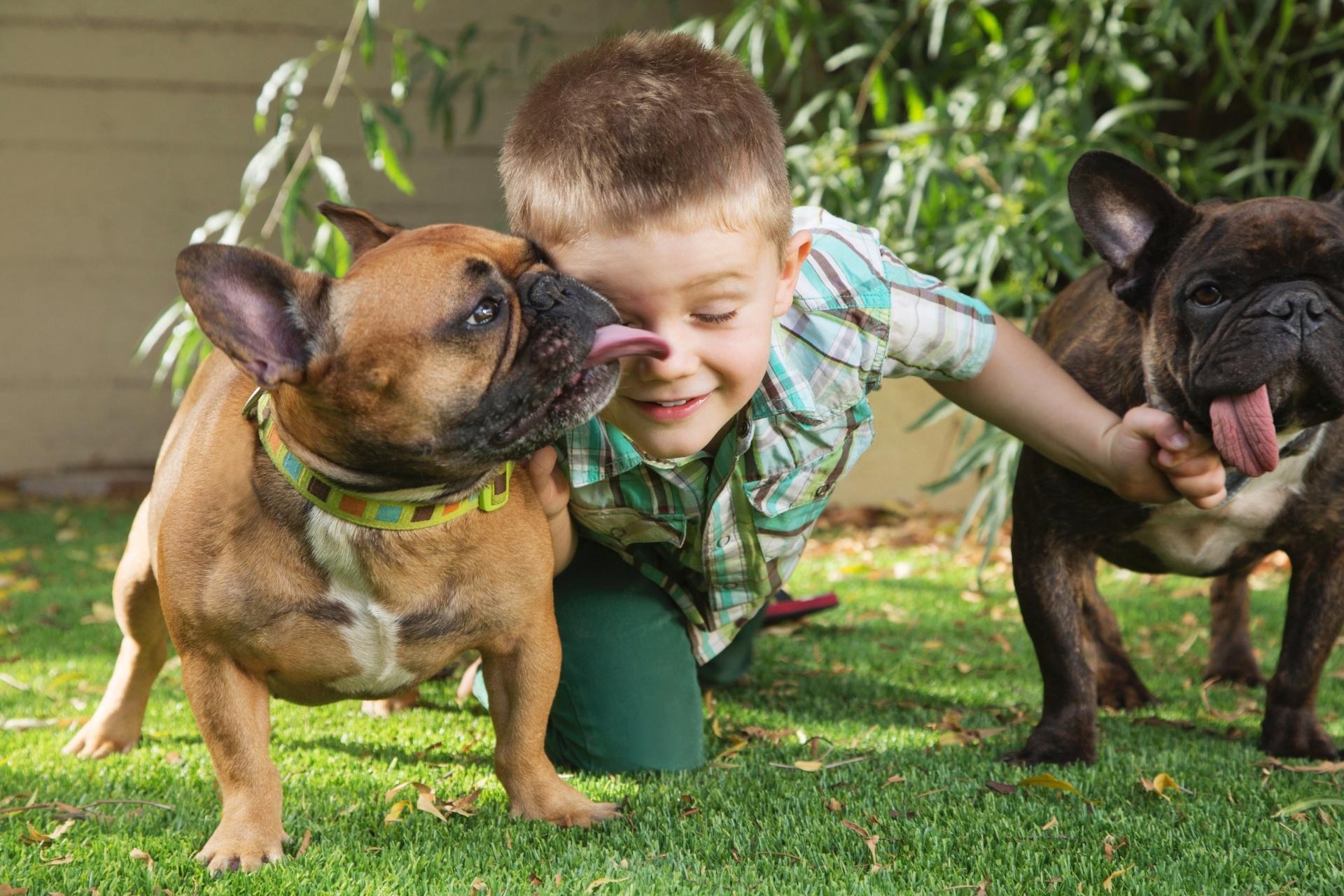 4.jun.2016 - Cachorro lambe criança