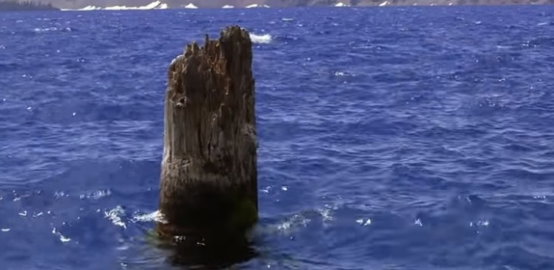 Tronco de madeira flutua na posição vertical e intriga cientistas