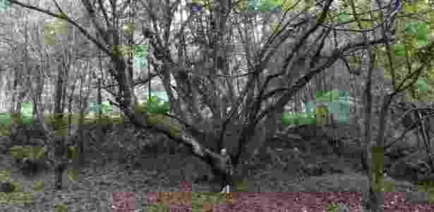 A primeira árvore que Vicente plantou foi uma castanheira - Gibby Zobel - Gibby Zobel