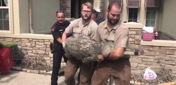 Policiais retiraram jacaré de 2,7 metros de comprimento da casa de Foster