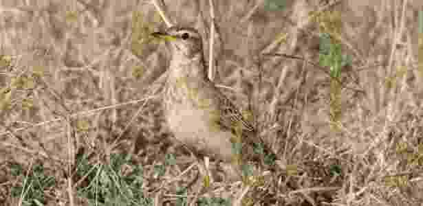 As aves que costumam migrar da Europa para a África possuem sistema imunológico mais fraco que o das nativas (como a da foto) - Peter Steward/The New York Times