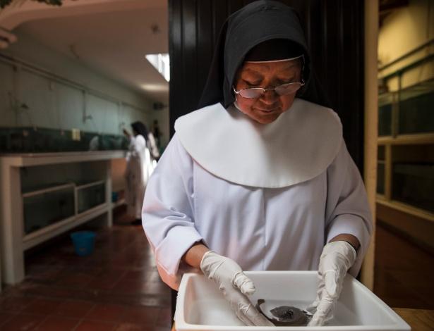 Irmã Ofelia Morales Francesco inspeciona uma achoque da colônia de mais de 300 espécimes no convento de Pátzcuaro, no México