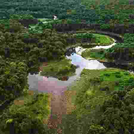 Além da Mata Atlântica, Caatinga, Pampa e Pantanal também serão fiscalizados - Getty Images