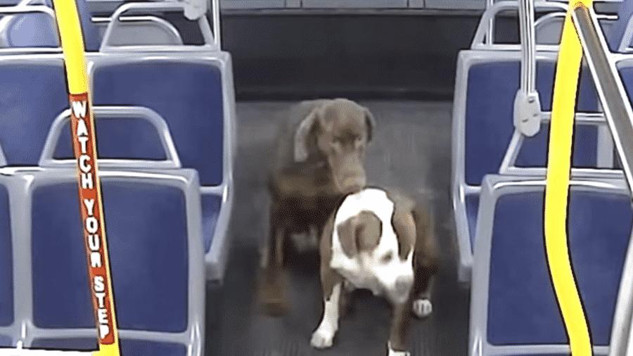 Motorista de ônibus resgata cachorros perdidos nos EUA - Reprodução/Youtube/RideMCTS